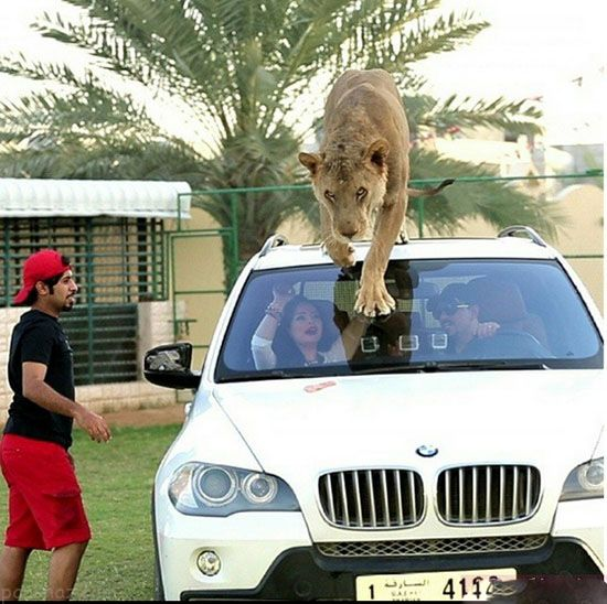 زندگی عجیب این پسر پولدار با حیوانات وحشی (عکس) 1
