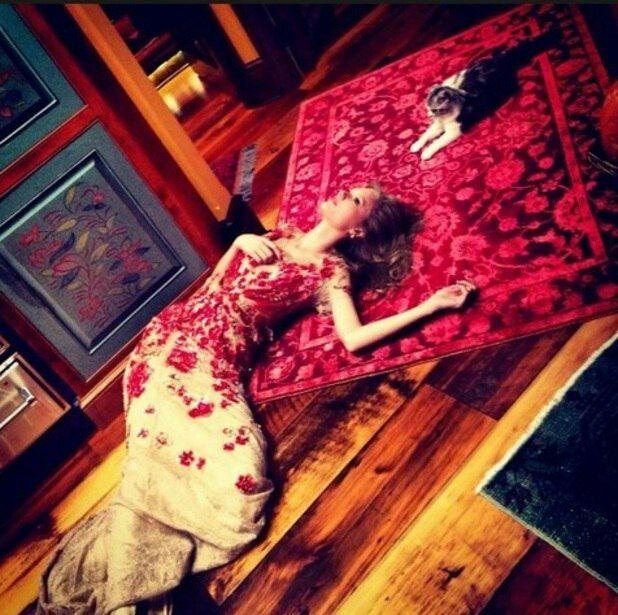 عکس روز گربه مبارک!! » تیلور سویفت | TaylorSwift.Pro عکس جدید