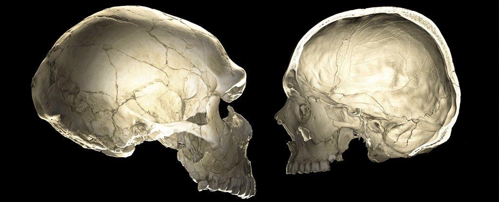 ژنهای نئاندرتالیتان میتواند بر شکل مغزتان تاثیر بگذارد! 1