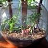 عکس باغچه در منزل - Bing images عکس جدید