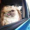 عکس سگـی با موهای شـگفت اور...! عکس جدید