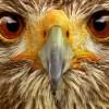 گالری عکس حیوانات - صفحه 4 عکس جدید