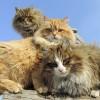 عکس گربه وجوجه - Bing images عکس جدید