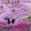 عکس ناز | اولين بارون بهاري خانه ما و گل هاي ... عکس جدید