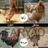 عکس های طنز از حیوانات عکس جدید