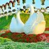 عکس بزرگترین پارک گلی جهان ( دبی ) عکس جدید